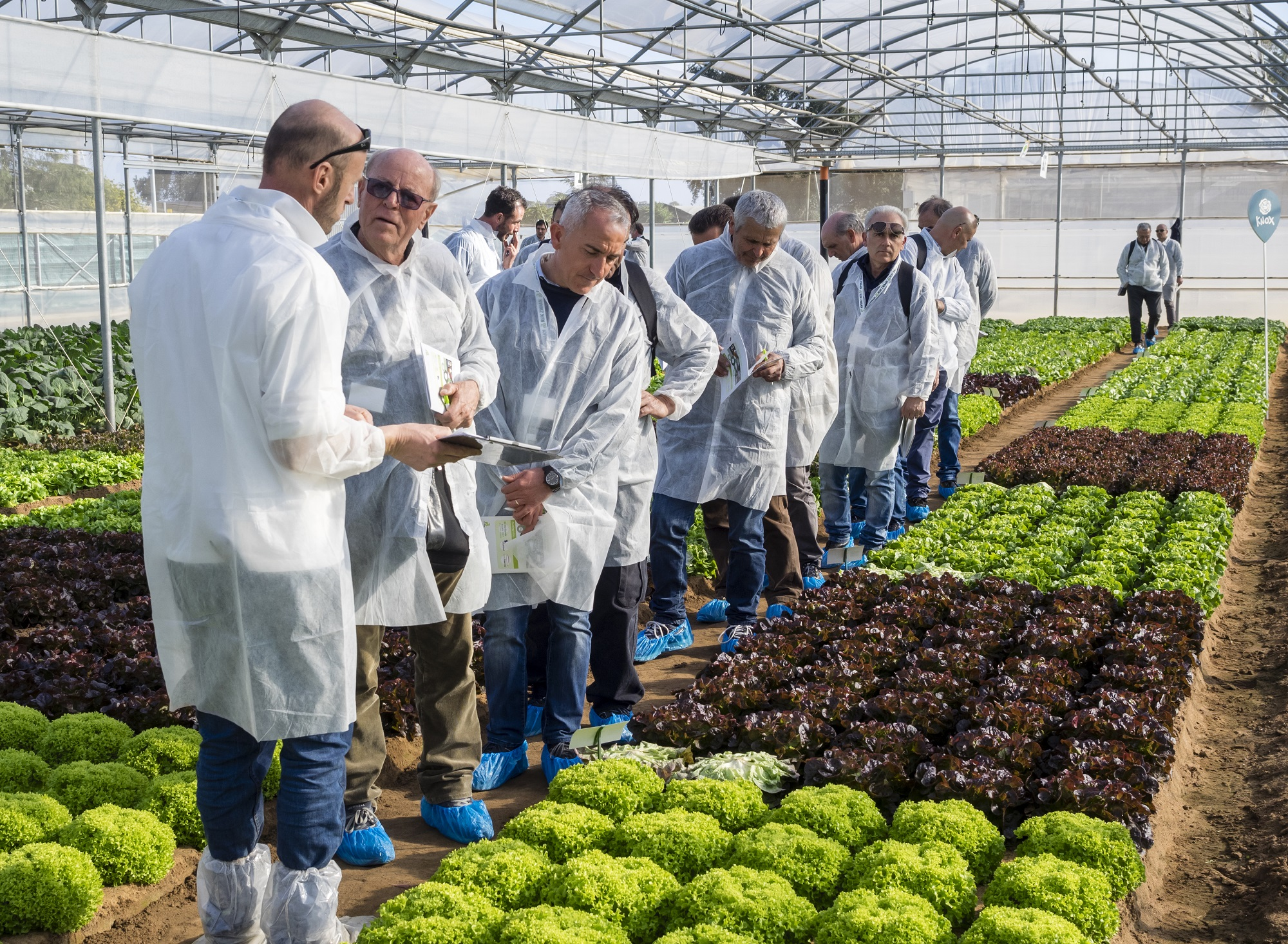 Growers visiting greenhouse Italy