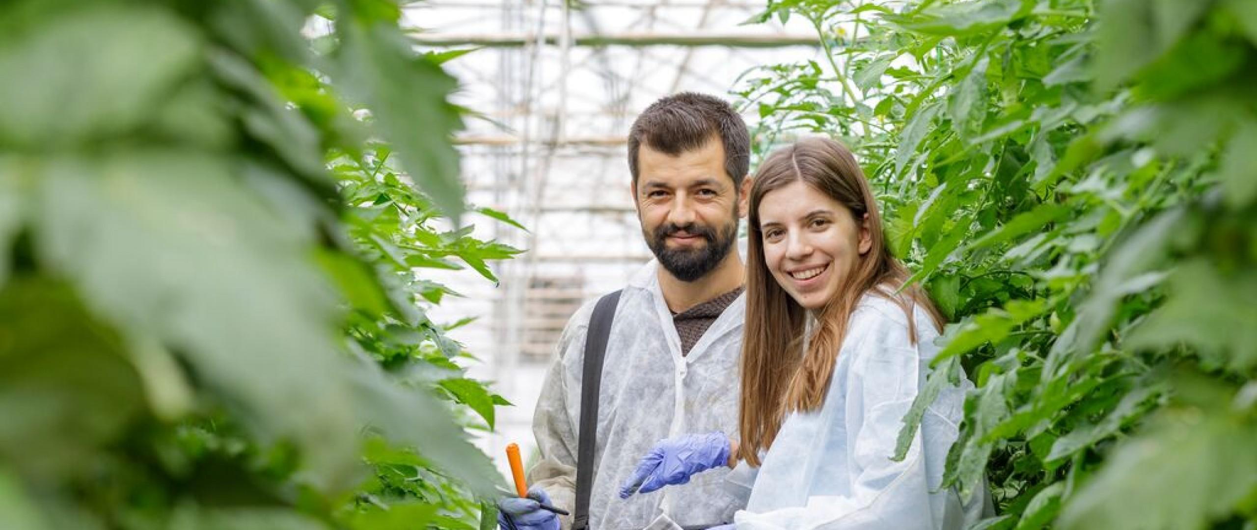 Rijk Zwaan colleagues in tomato crop