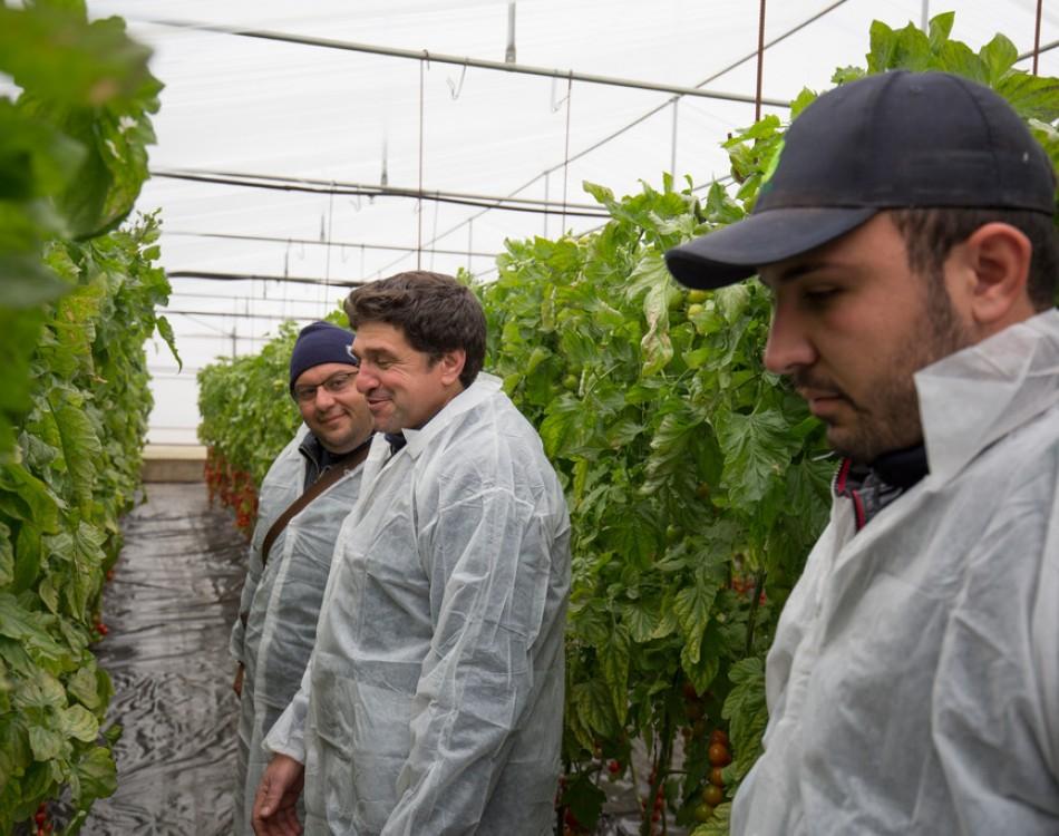 Produttori pomodoro Sicilia Rijk Zwaan